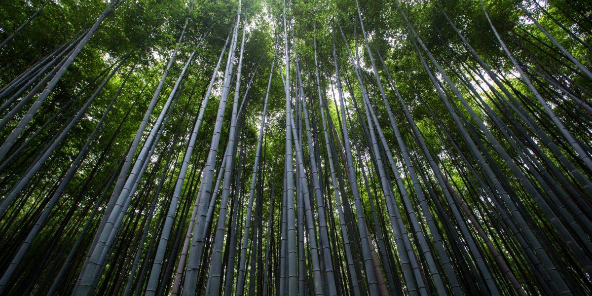 Pe Bamboo